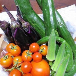 市民農園の収穫で野菜を活けてみよう