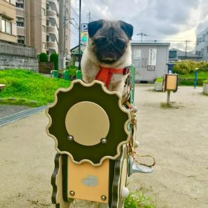 公園のココさん