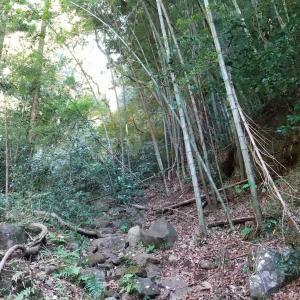 箱根外輪山(1)
