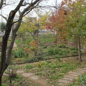 今日の野バラ庭・・・落ち葉がイッパイ!