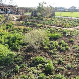 ギリギリまで お庭の様子を見てください。