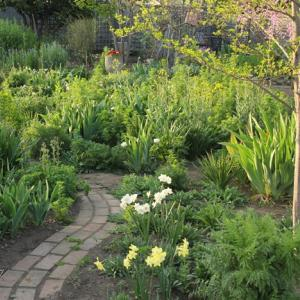 今日の 野バラ庭