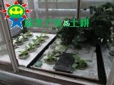 11月末の菜園(水耕)の様子