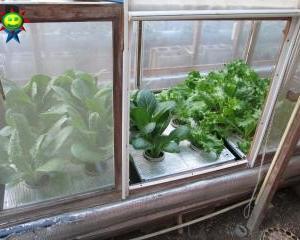 12月末の菜園(水耕)の様子