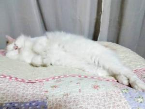 ルナちゃんのみゆきちゃん寝&盆踊り