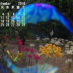 9月のカレンダー(*^_^*)
