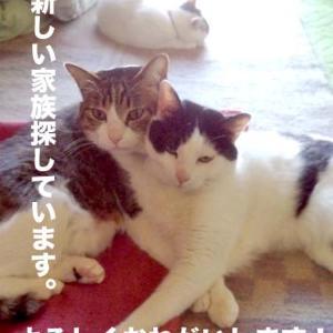【緊急!4月末まで/東京】里親募集(5/23報告追加)
