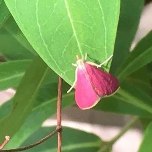 昨日の庭 ピンクの可愛らしい虫