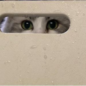 誰かが私を見つめてる