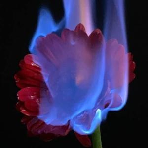 お花を燃やす!?