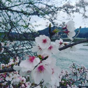 桜~合格。