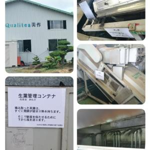 日本緑茶の産地訪問