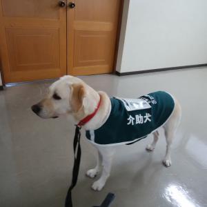 身体障害者補助犬シンポジウムの反省会&打合せ