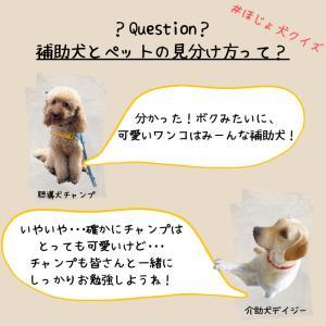 「ほじょ犬クイズ11」に挑戦!