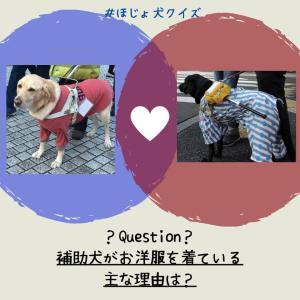 「補助犬クイズ12」に挑戦!