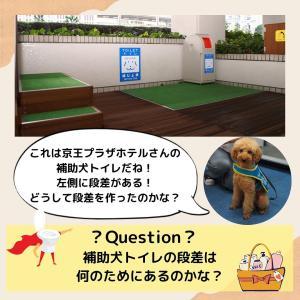 「補助犬クイズ56」に挑戦!