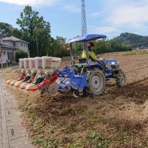 大麦播種作業