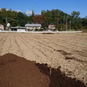 本日の畑作業
