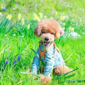 春のおさんぽ