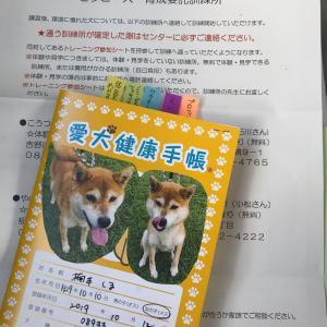 保護犬しまちゃん、セラピー犬への道