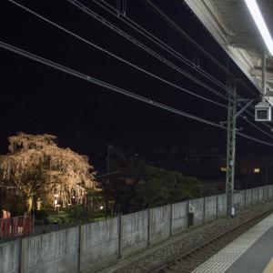 駅から夜桜見物