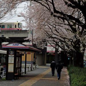 高尾駅南口の桜並木