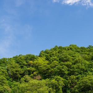 5月の高尾山麓の色