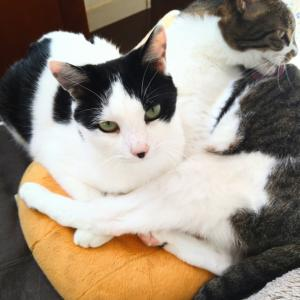 猫、仲良し