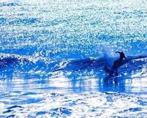 浄化の海◇