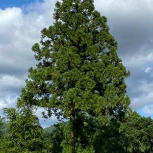私の気持ちは18年間一本の木