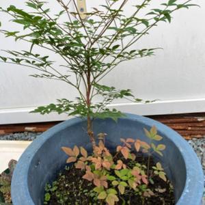 当院で育てている植物が大きくなりました