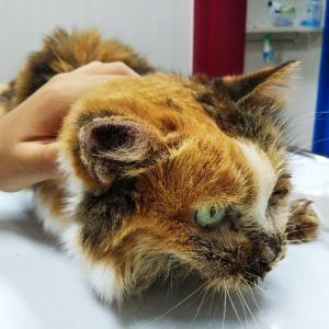 美奈ちゃん、耳の付け根のコブの細胞を検査に出しました。
