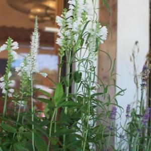 家庭に広がる除草剤・殺虫剤