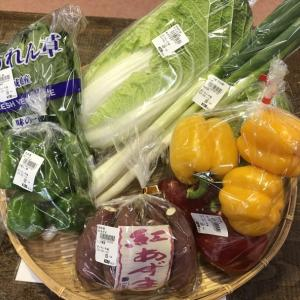 大洗まいわい市場 まいわい市場は本日も新鮮お野菜販売中!