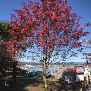 秋  紅葉