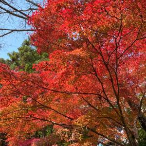 京都で一番早い紅葉の神護寺