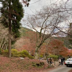 落ち葉の大文字山