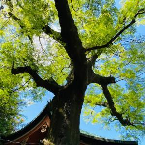 双ヶ丘 御室桜 八十八ヶ所霊場