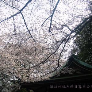 諏訪神社と西日暮里公園の桜