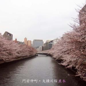 門前仲町・大横川桜並木