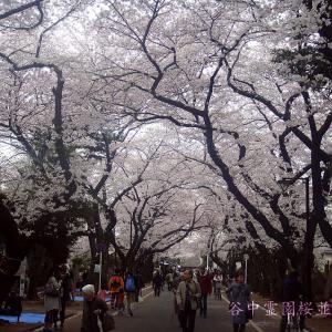 谷中霊園の桜並木