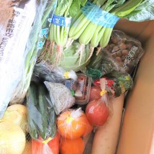 お野菜のドライブスルーとイケメンたち