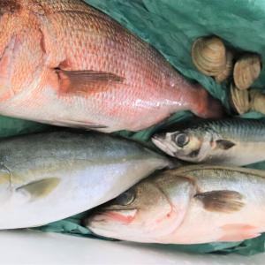 大漁です‼「東京湾大感謝祭」ちょこっとレシピあり♪