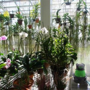 遠心式加湿器が蘭栽培温室の湿度調整で活躍中