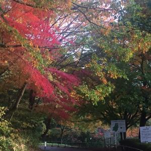 珍しく紅葉を見に。