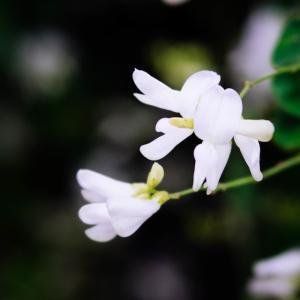 9月の花 その11 萩の花