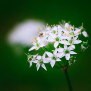 10月の花 その19 韮の花