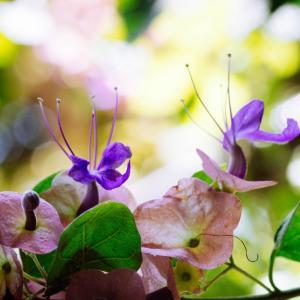 9月の花 その15 タヒチアンハット