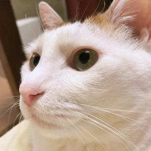 猫の慢性腎臓病 ふくちゃん編 もうちょっと!