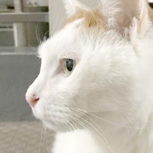 猫の慢性腎臓病 ふくちゃん編 現状報告②